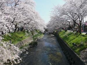 1024px-Gojo-gawa_in_Iwakura_05